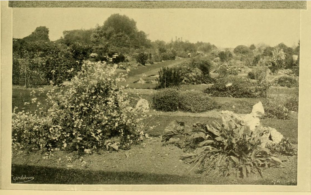 The Students' Garden, 1911