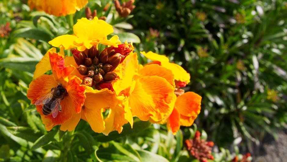 Plasnewydd Community Gardens