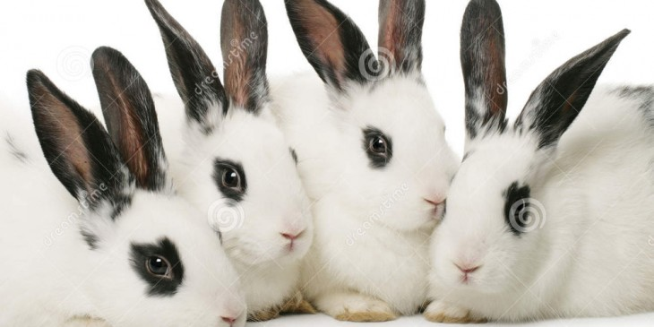 Fantastic four rabbits